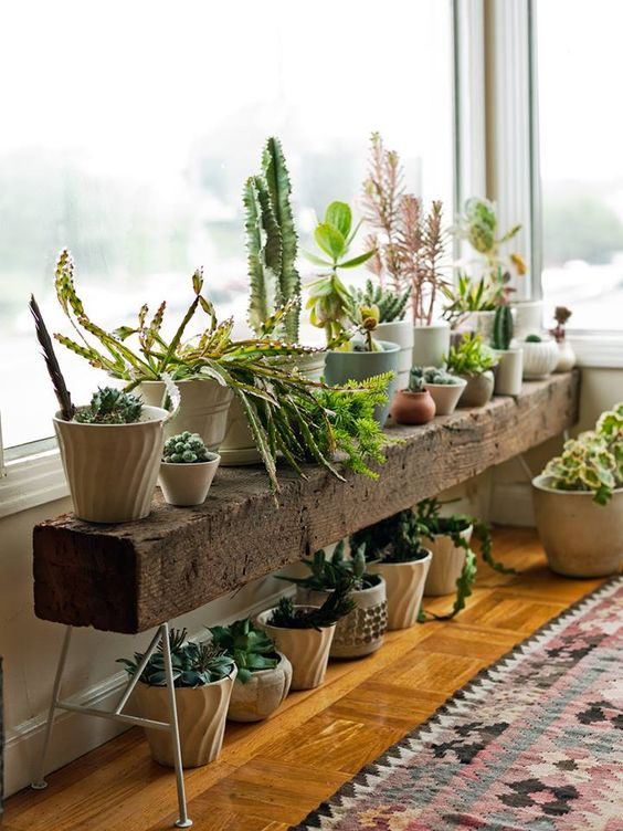 Living room succulent design