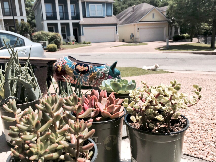 texas_succulents.jpeg