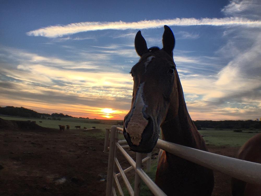clay_ranch_horse