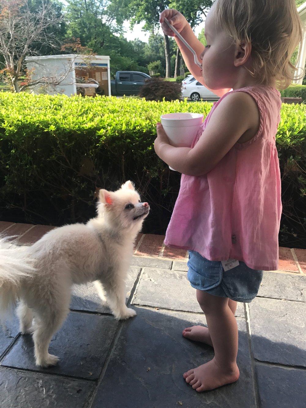 Brooke_Clay_RanchDog_Pomeranian_0003.JPG