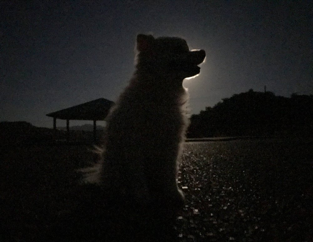 Brooke_Clay_RanchDog_Pomeranian_0025.JPG