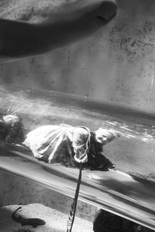 aquarium_lolitas-23.jpg
