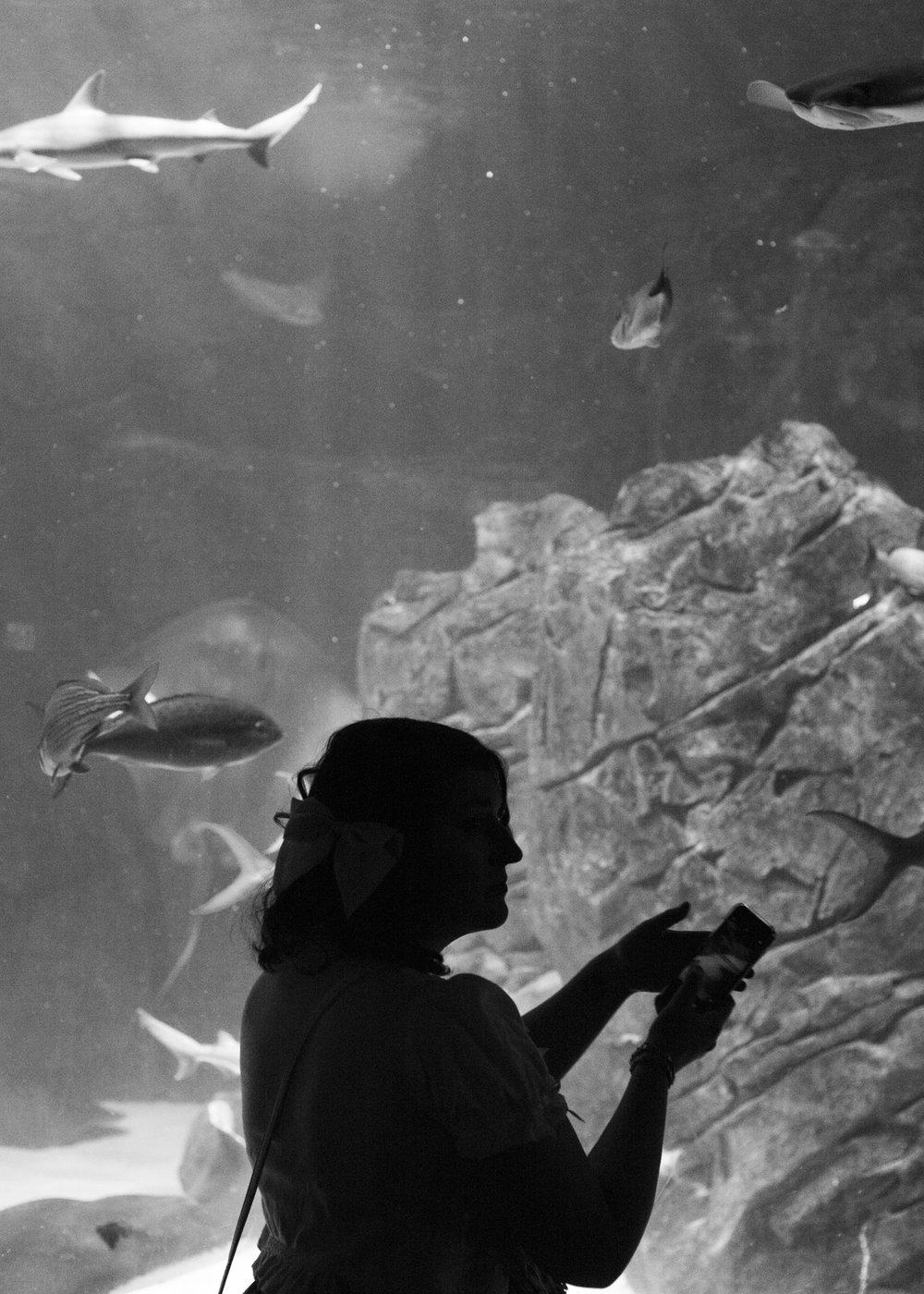 aquarium_lolitas-37.jpg