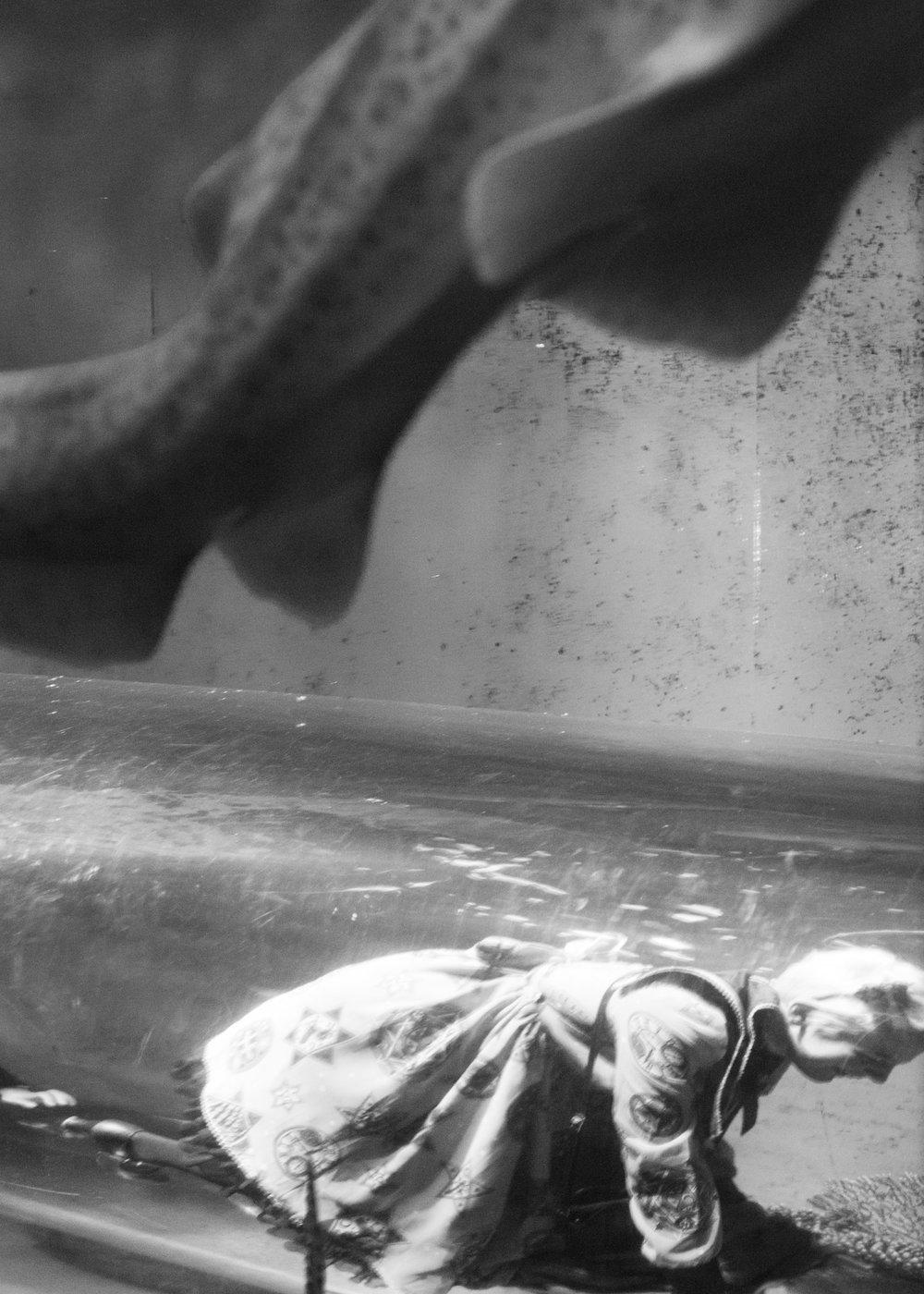 aquarium_lolitas-24.jpg