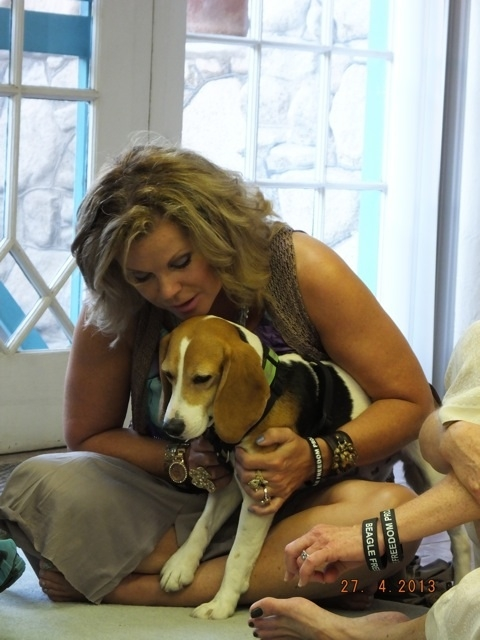 The dog pictured here was surrendered from a laboratory and rehabilitated by Beagle Freedom in Los Angeles. He went from a lifetime of torture to a happy home with a human mother who loves him. I asked the class to help rehabilitate him so that he could have a peaceful life free of post tramatic stress.