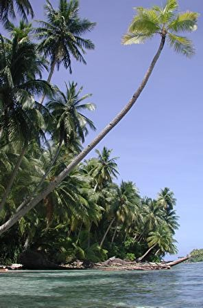 shore and palm.jpg