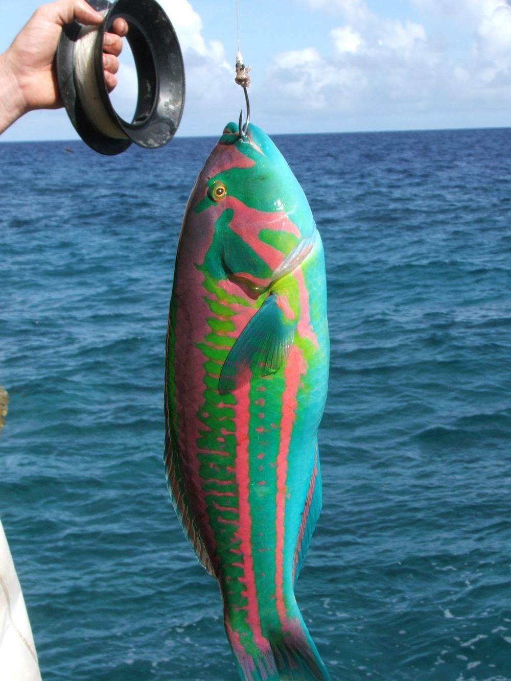 5. Sheshunoff - Angaur - Fish.JPG