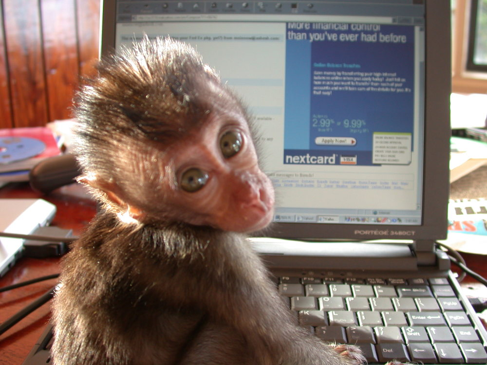 2. Sheshunoff - Monkey - With Computer.JPG
