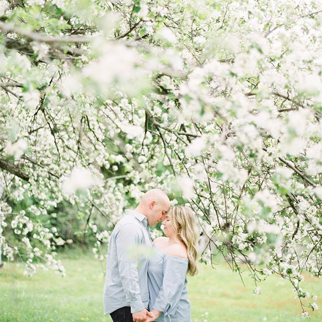 by this time next week these two will be married already! ❤️❤️❤️ photo by: @andrewmarkphoto  #engagementphoto #wedding #summerblooms #nature #beauty