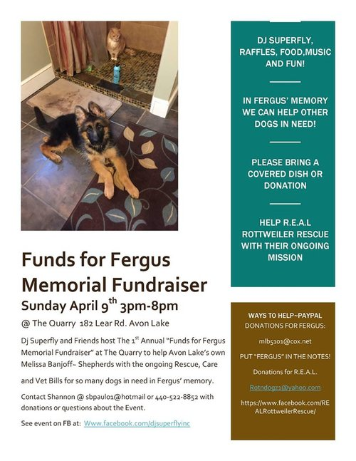 Funds For Fergus Memorial Fundraiser Real Rottweiler Rescue