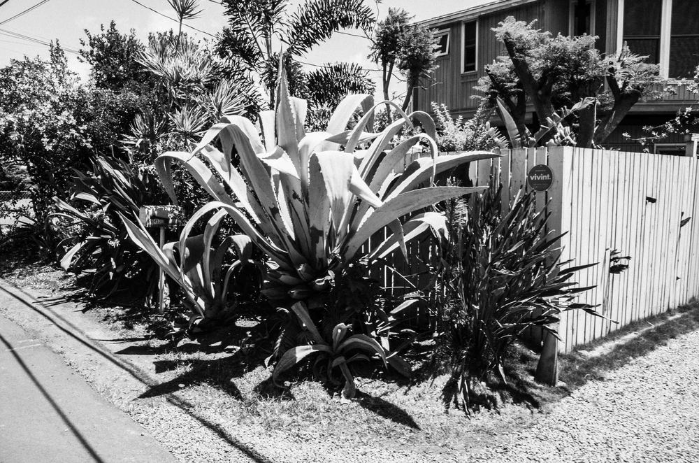 Aloha_Mahalo-6.jpg