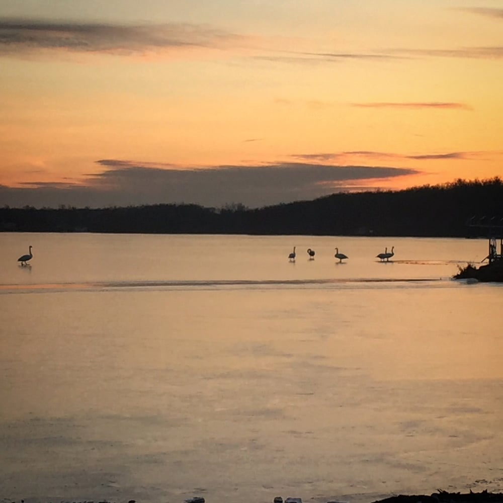 Some swans and a sunset. Pretty cool.