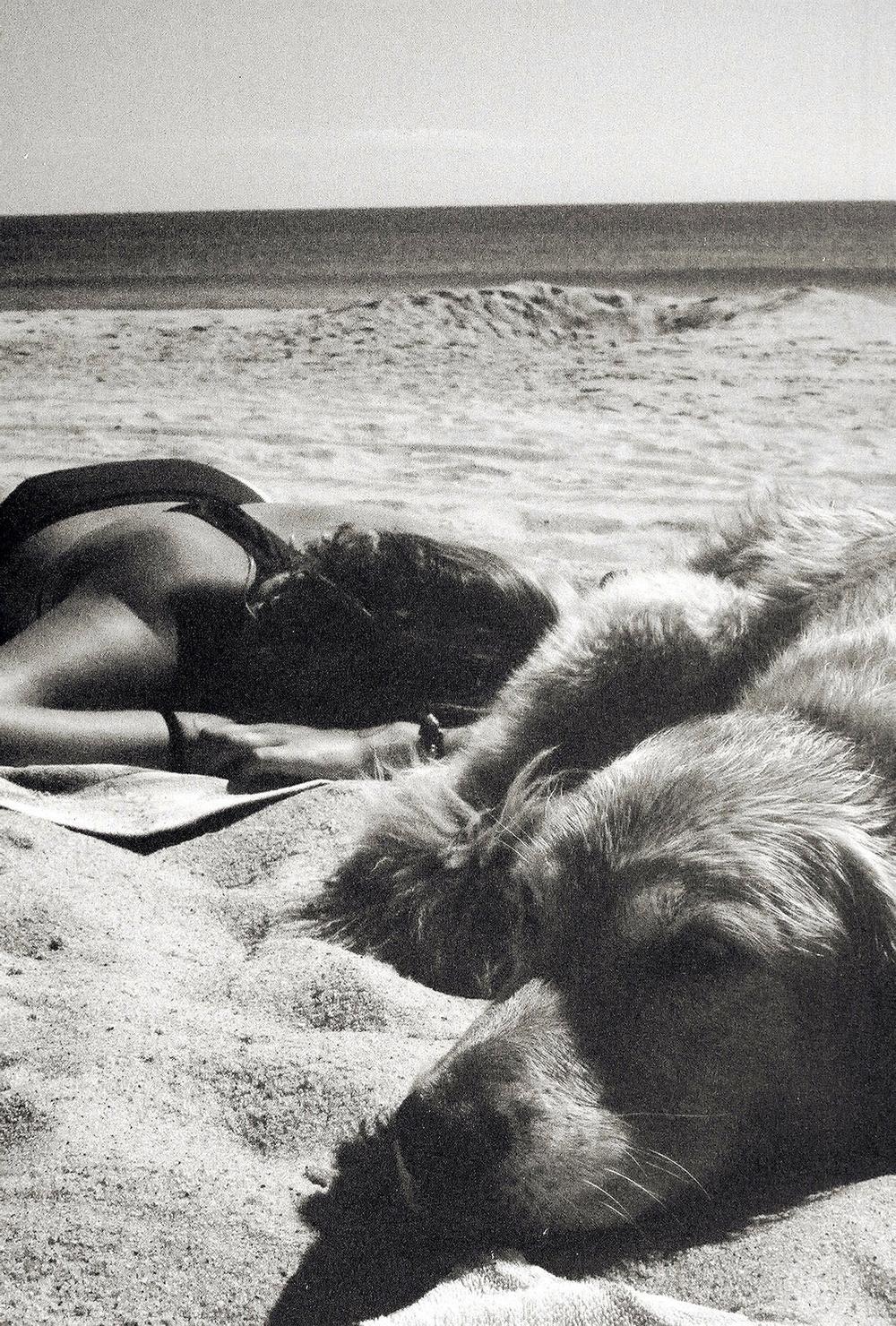 Paradis_dog-days.jpg