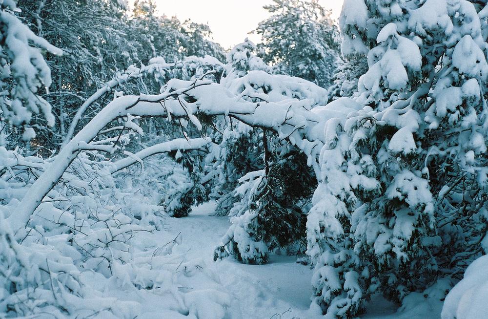 Paradis_Winter-Arches.jpg