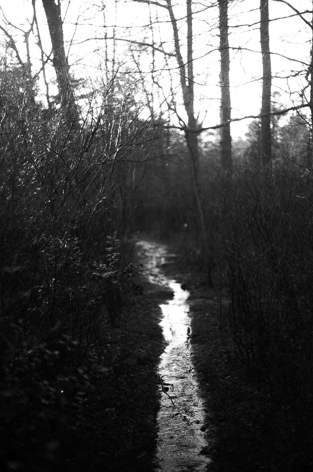 trail to cedars.jpg