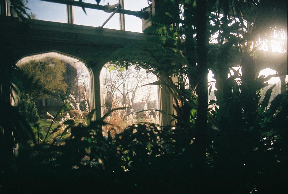 sylvia plath greenhouse2.jpg