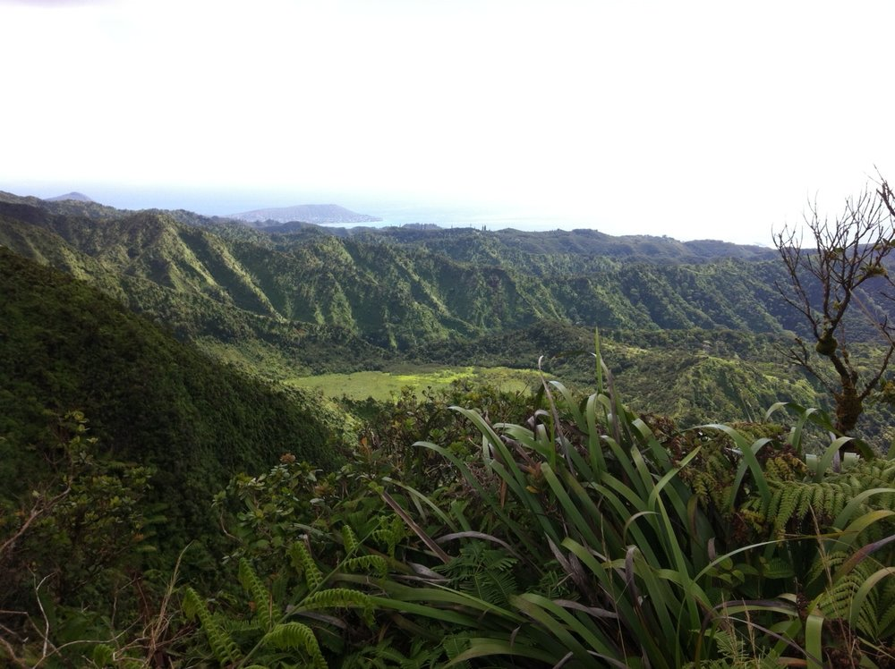 Above: View of Palolo Valley from the top of Ka'au Crater. Photo courtesy Talia Portner.