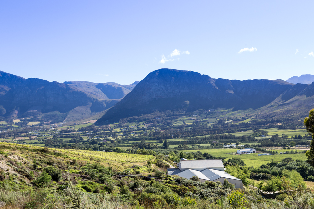 Our cellar is nestled amongst vines and fynbos in the Bo-Hoek corner of Franschhoek valley.