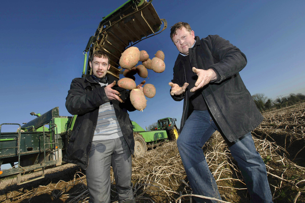 IFA Potato survey launch