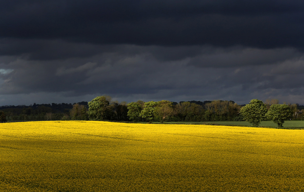 A Rapeseed field outside of Athy Co Kildare