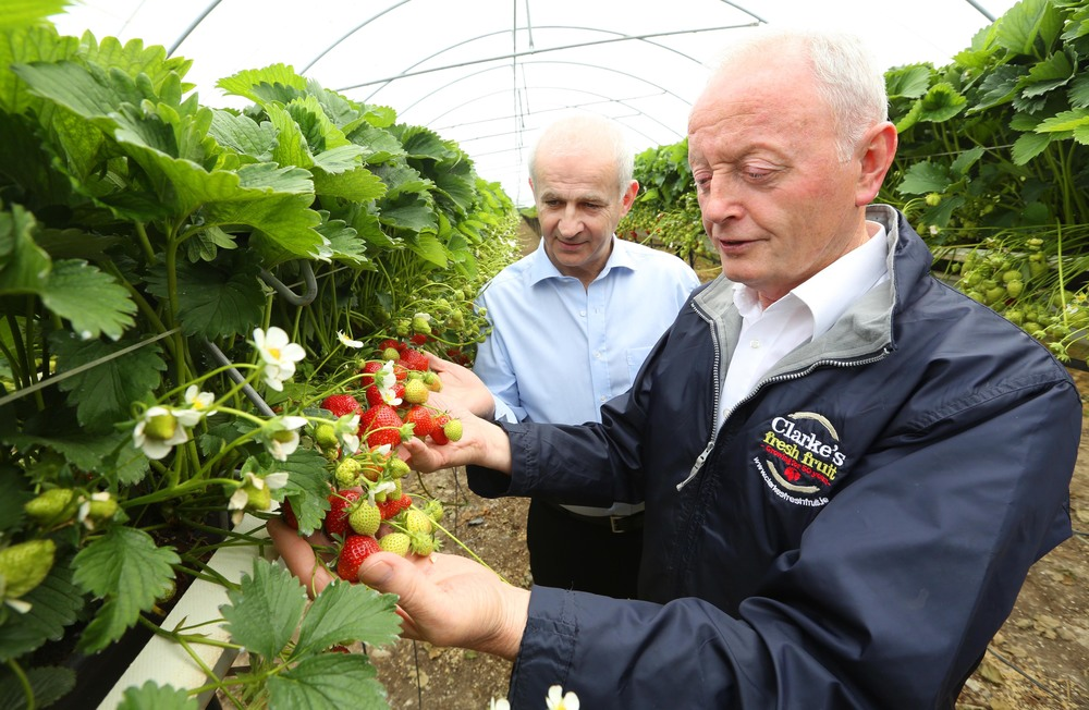 Commercial Strawberry Grower Pat Clarke with former IFA President Eddie Downey