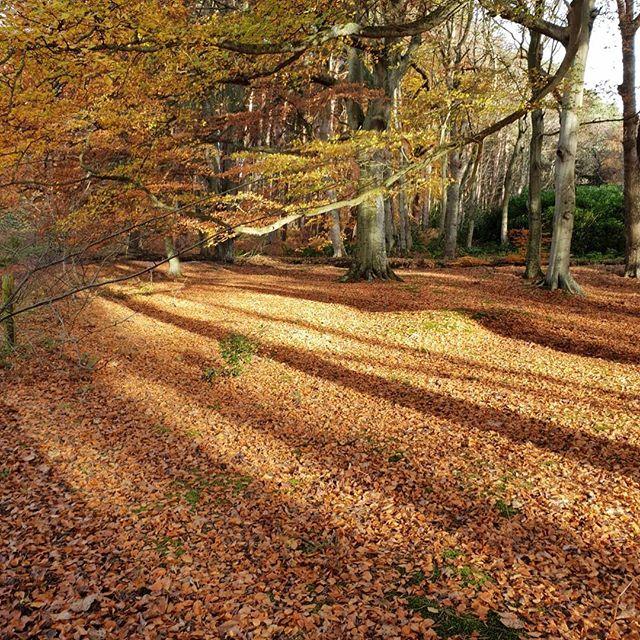 🍁🍂🧡 #autumn #scotland