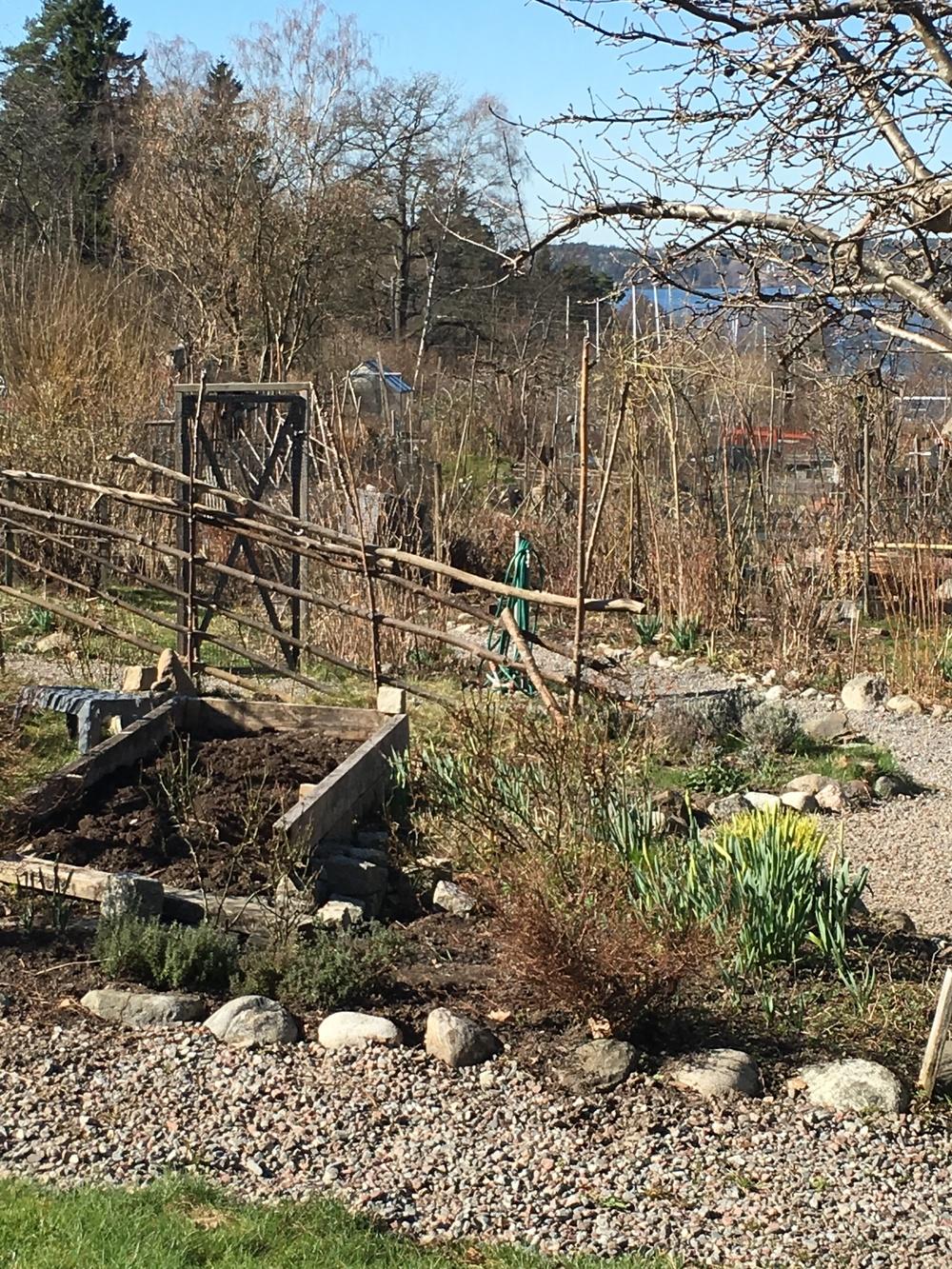 Fika i Bellmans koloni trädgårdar