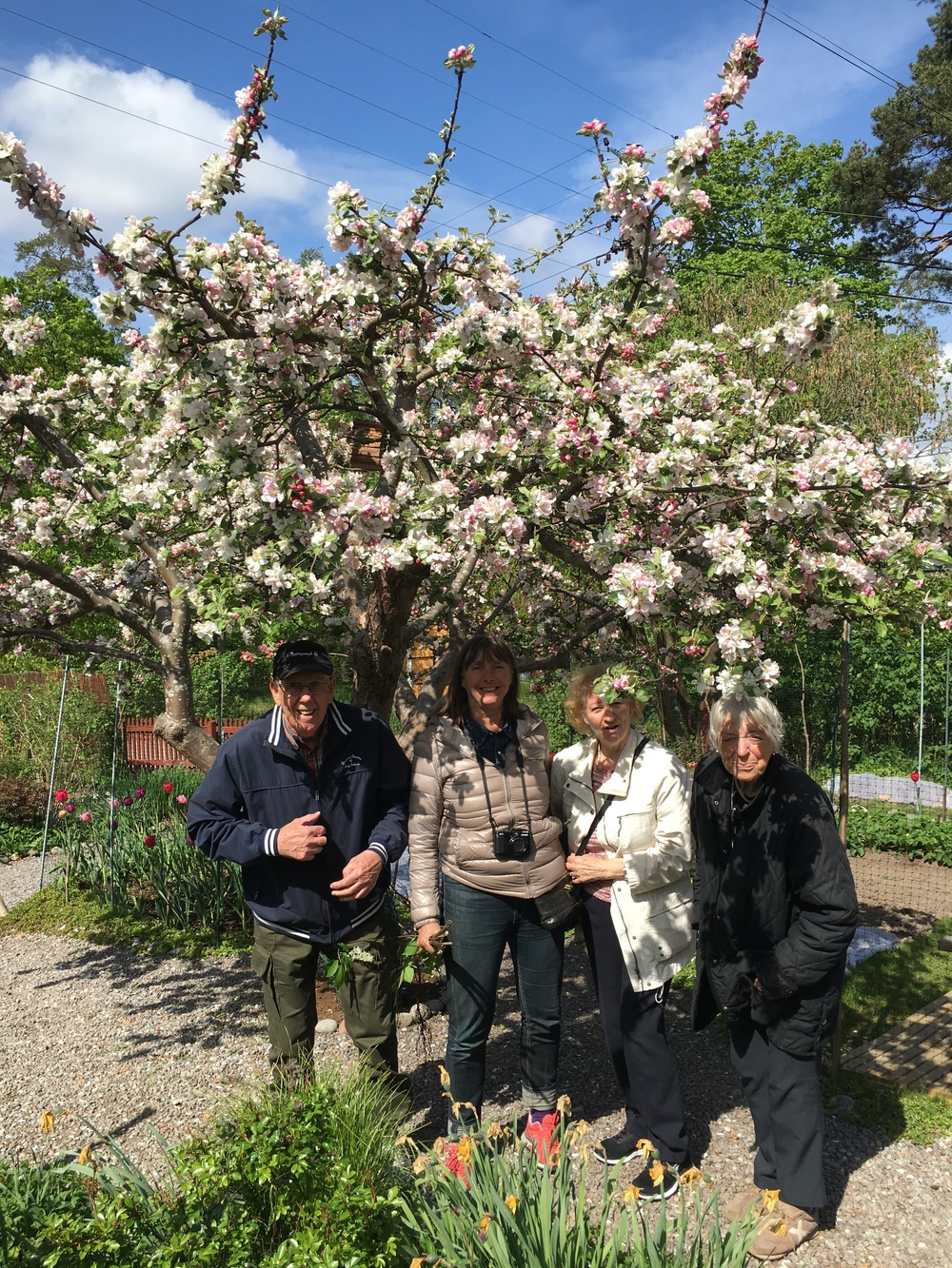 Vackert träd på Bellmans trädgårdar.