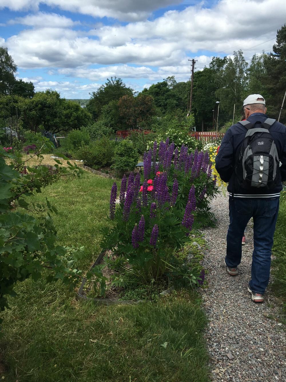 Promenad i Bellmans trädgårdar