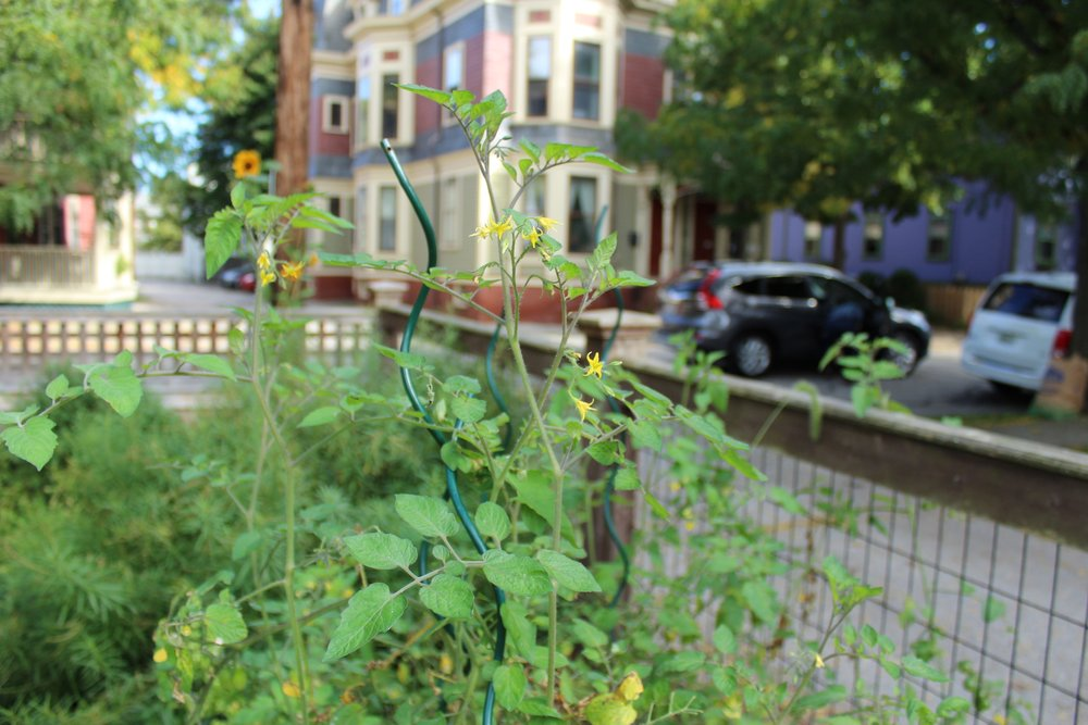 Gardens at Gilbert and Hammond Streets Photo by Jessica Jennings