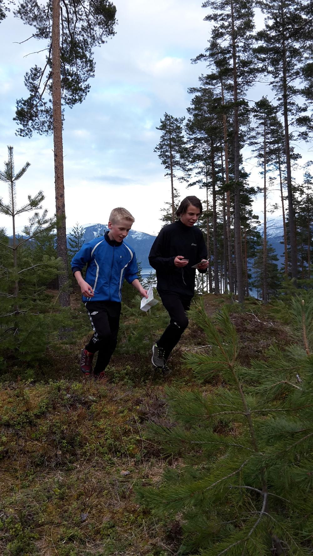 Spreke o-løparar og speidarar i fint driv i skogen.