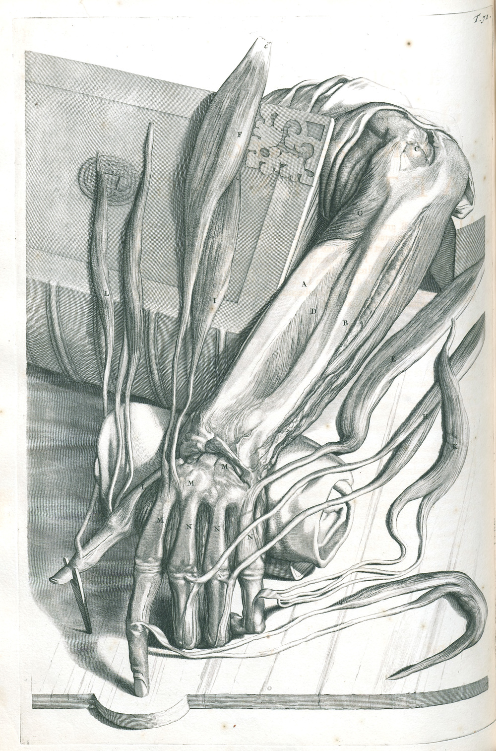 Plate 71 showing the dissection of the left forearm and hand. The hand is strategically posed, perhaps to reference a gesture often depicted in Renaissance art.    Govard Bidloo (1649-1713).  Anatomia humani corporis.  Amsterdam: Sumptibus viduae Joannis à Someren, haeredum Joannis à Dyk, Henrici & viduae Theodori Boom, 1685. Heirs 724 Illustration by Gerard de Lairesse.