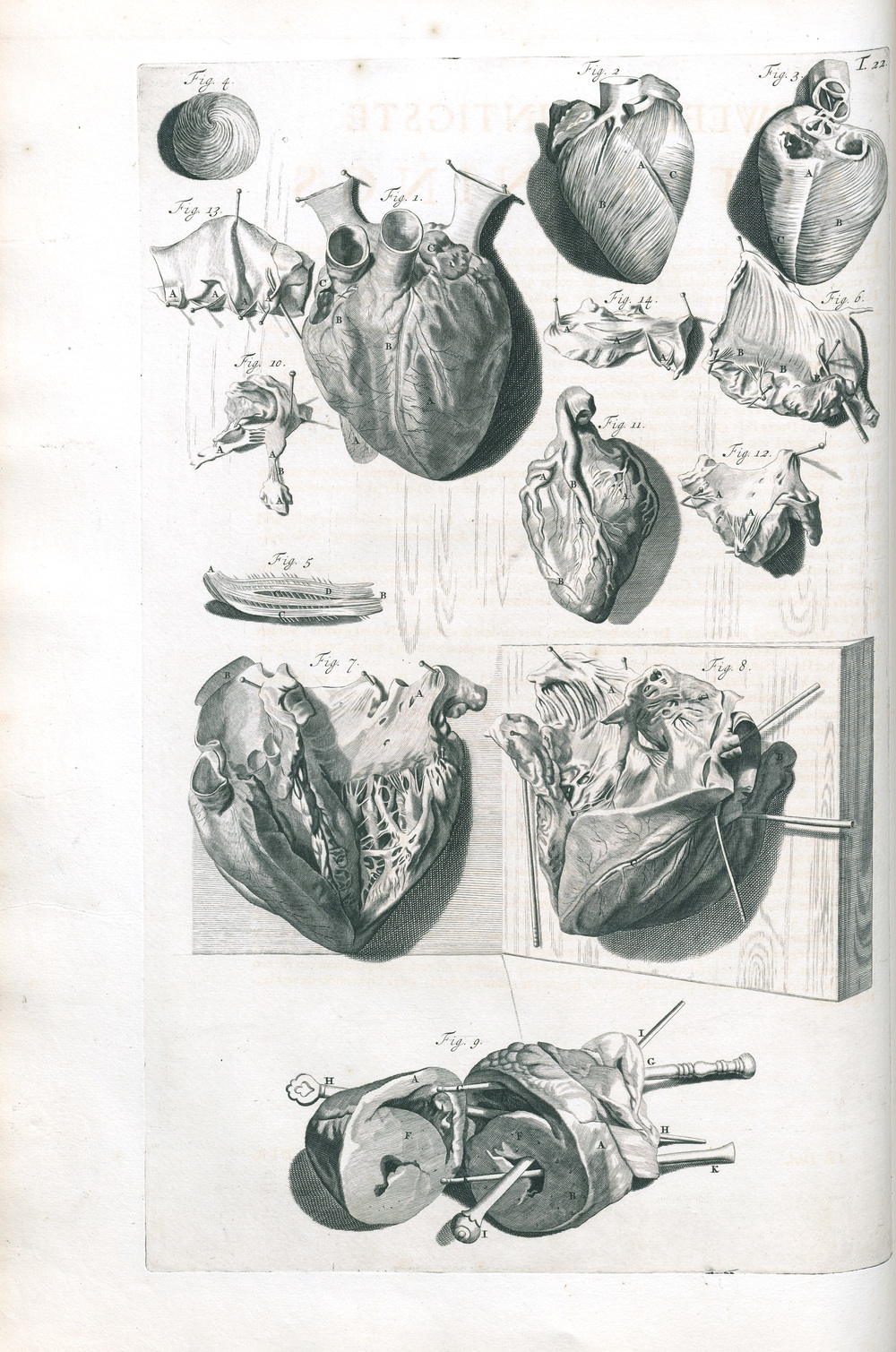 Plate 22 showing the dissection of the heart. Check out those decorative probes!  Govard Bidloo (1649-1713).  Anatomia humani corporis.  Amsterdam: Sumptibus viduae Joannis à Someren, haeredum Joannis à Dyk, Henrici & viduae Theodori Boom, 1685. Heirs 724 Illustration by Gerard de Lairesse.