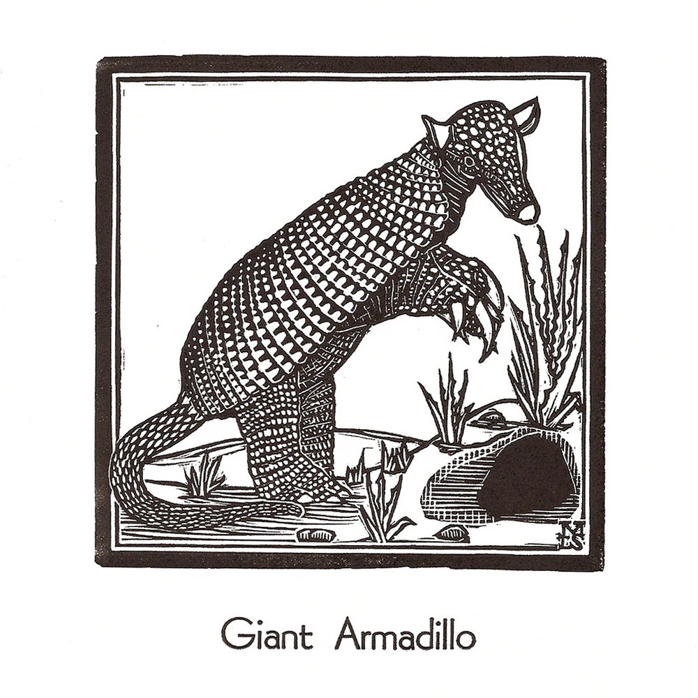 Giant Armadillo2.jpg
