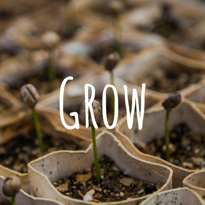 Grow. - Based on your daily reading and prayer outside of your 4x4 Group, ask each other these four growth and accountability questions:1. What is God saying to me in this?2. What am I going to do about it this week?3. What did I do or not do last week?4. What was the result of that?