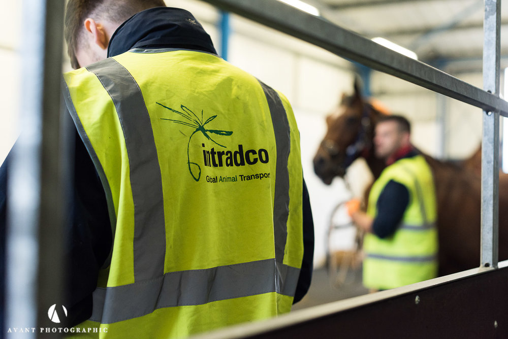 Intradco Global Animal Transport