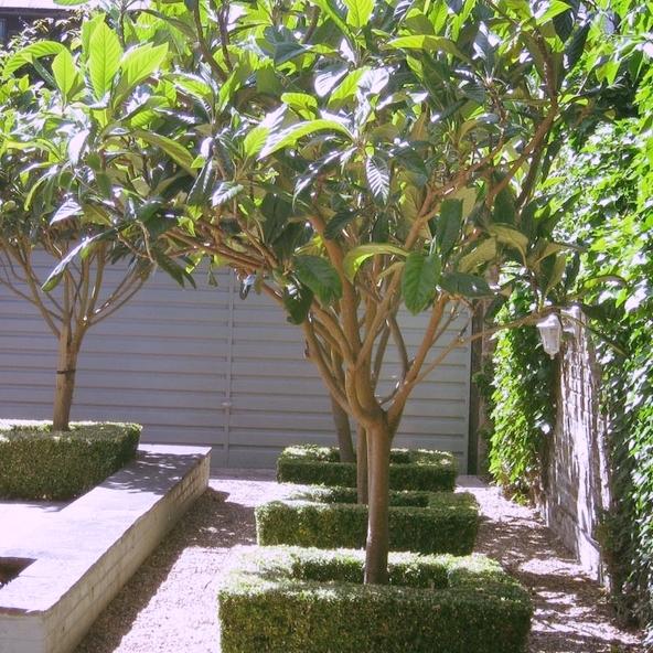 Photo credit:    http://architecturalplants.com