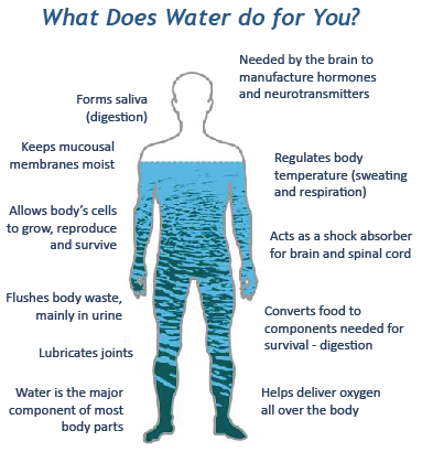 Your body can only make about 8% of the water it needs- the rest is up to you and what you put in your mouth. We do not (at least we are not supposed to) store water so we must consume it.