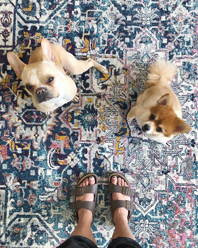 We are staaaaaarting to settle in to the new place. It's been a cycle of work, unpacking, work, unpacking, loaf with these floofs, repeat. How is everyone's weekend going? 💗💜 . . #frenchie #pomeranian #pom #frenchbulldog #dogsofig