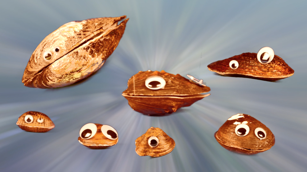 I Live Here And Other Mussel Musings.png