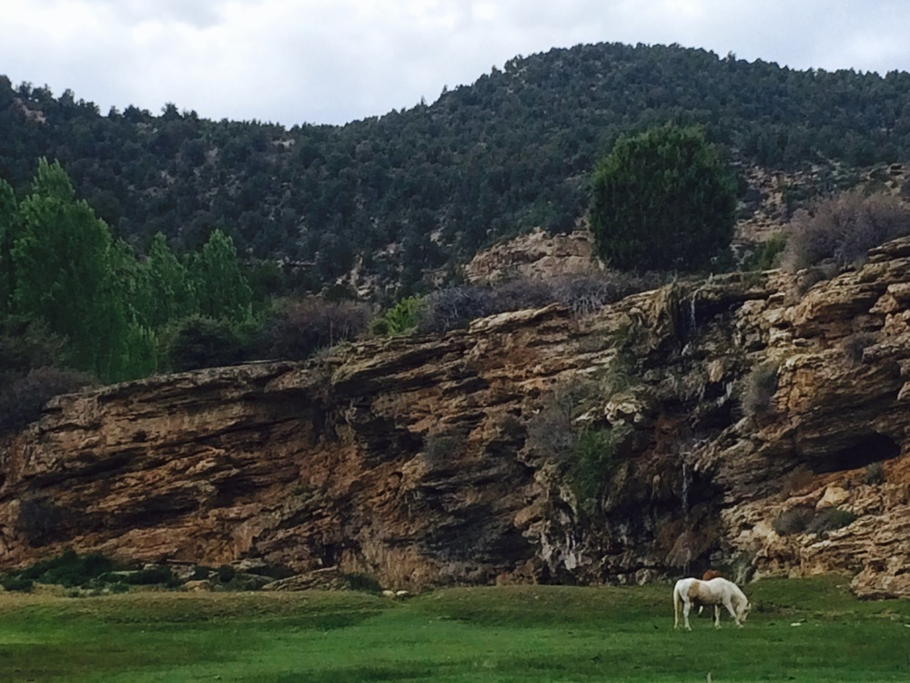 Saw a unicorn on the way to Zion