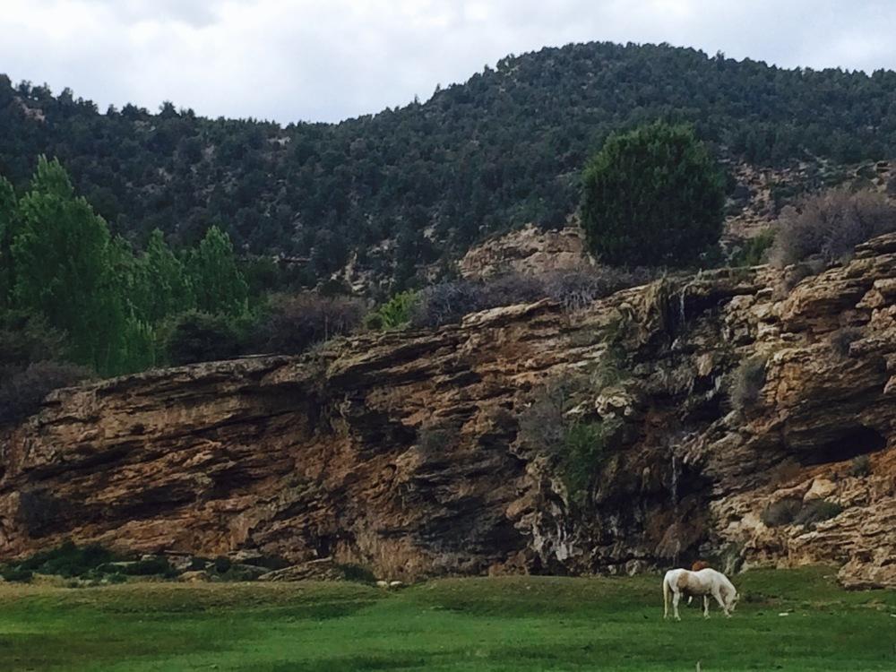 Saw a unicorn on the way to Zion