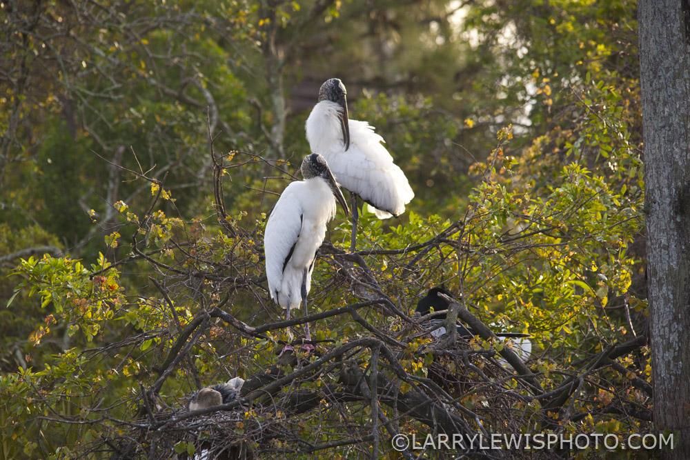 Gatorland_Bird_2.jpg