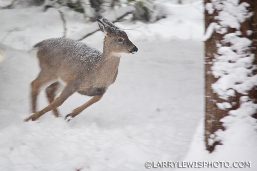 deerfawns-201417.jpg