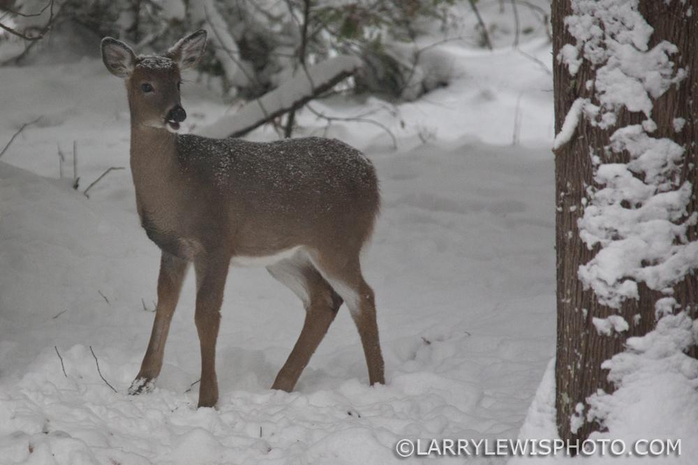 deerfawns-201404.jpg