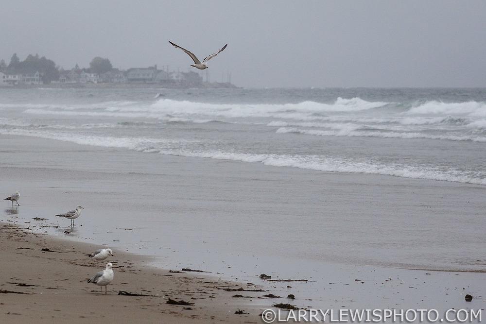 Coastal_Maine012.jpg