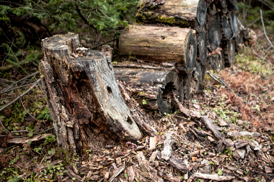 The Forgotten Wood Pile