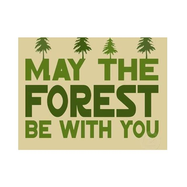Happy Earth Day! 🌎🌳🍃☀️🌊! #theforceawakens #forest #wilderness #outdoors #outside #earth #planet #earthday #nature #body #healthy #healthylifestyle #healthyliving #muscle #igdaily #dedication #fit #fitness #fitfam #fitspo