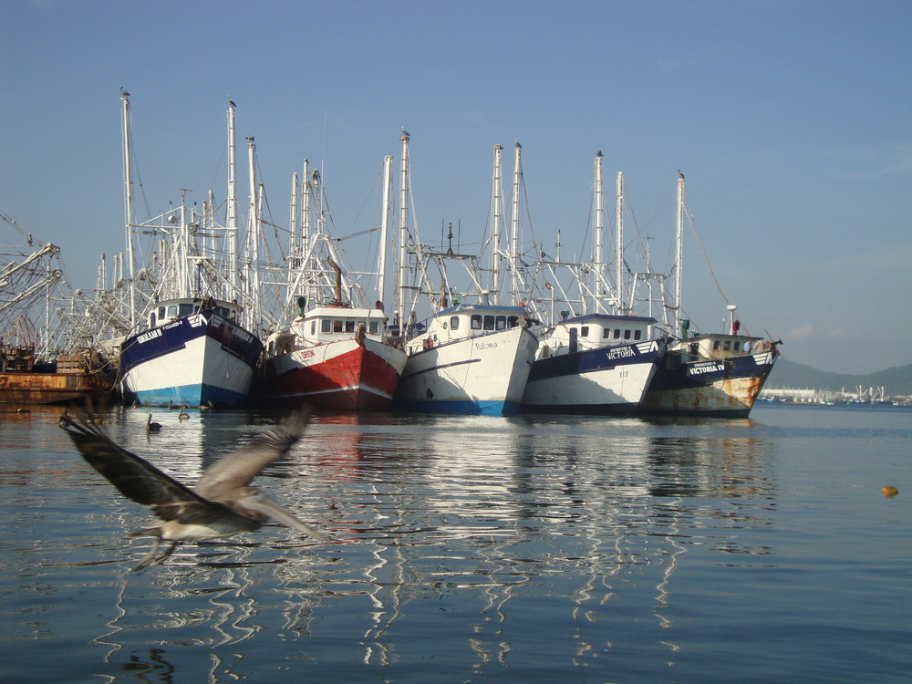 Shrimp Boats.JPG