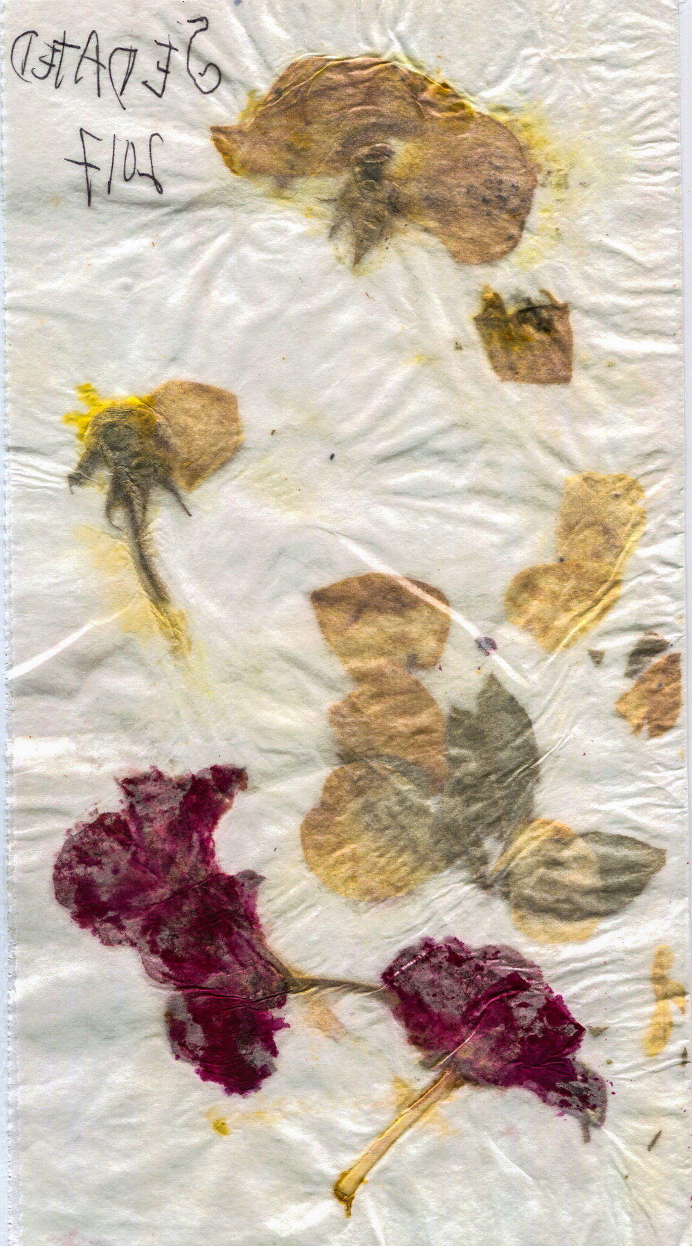 Sedated-2017-Pressed-Flowers.jpg